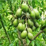 Xử lý hạt giống trong trồng trọt