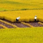 Khác hộ khẩu với bố mẹ có được nhận đất tặng cho đất nông nghiệp không?